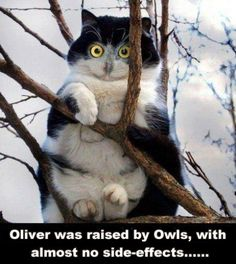 Oliver was raised by Owls, with almost no side-effects .......