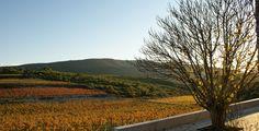 Vinyes de tardor al Celler Mas Rodó #enoturisme #penedès #masrodó #rutadelxató