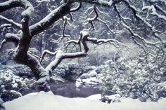 Snowfall, Portland Oregon