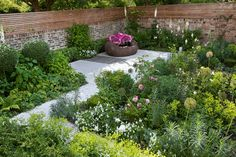 putney sw - garden: path edged with agapanthus + sedum + mediterranean planting + yew hedge