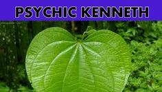 Powerful Psychic and Spiritual Services, WhatsApp: Fails, Plant Leaves, Spirituality, Plants, Make Mistakes, Spiritual, Plant, Planets