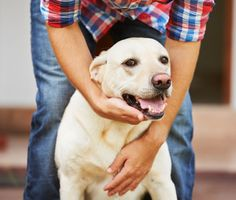 We love our pets, but the bond doesn't end there. Dr. Marty Becker explains the ways we benefit from our dogs, cats and other beloved pets.