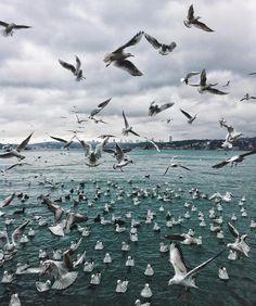 """""""Mi piace"""": 7,767, commenti: 81 - Sezgin YILMAZ (@sezyilmaz) su Instagram: """"The Birds.."""""""