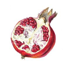 Pomegranate Drawing, Pomegranate Tattoo, Pomegranate Art, Dessert Illustration, Funny Illustration, Ink Illustrations, Botanical Illustration, Desserts Drawing, Fruit Photography
