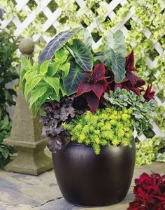 'Leafy Look' from Proven Winners--6 plants, 1 beautiful design for sun to part sun and all season color.