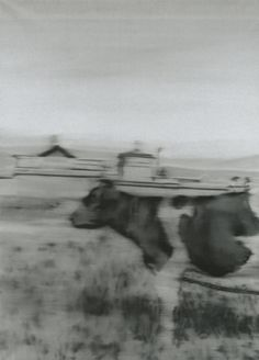 Gerhard Richter - Kuh II Cow II 1965 157 cm x 113 cm Oil on canvas