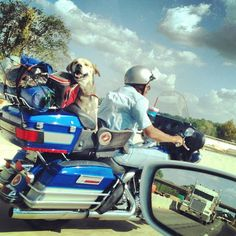 """dog on motorcycle chased by big rig"""" 