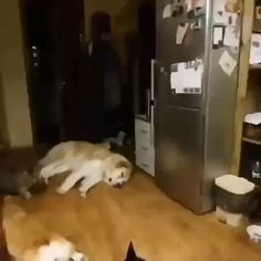Mission impossible be very quiet dogs dog puppy puppies cute aww a adorable Funny Animal Memes, Cute Funny Animals, Funny Animal Pictures, Cute Baby Animals, Cat Memes, Funny Cute, Animals And Pets, Cute Cats, Funny Gifs