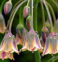 Love the Dew Drop Flowers