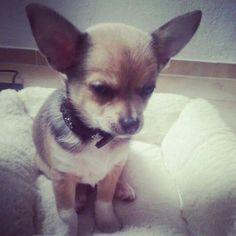 My little baby