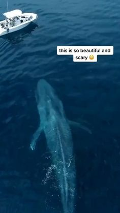 Cute Wild Animals, Cute Funny Animals, Beautiful Sea Creatures, Animals Beautiful, Nature Animals, Animals And Pets, La Ilaha Illallah, Beautiful Photos Of Nature, Ocean Creatures