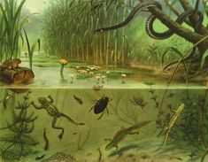 Leven in sloot en plas [Life in stream and pool] ca. 1930 by M.A. Koekkoek - Dutch educational poster, used in schools for decades. I loved it, I remember staring at this for hours :)