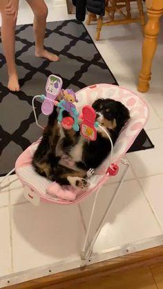 A Dog Baby