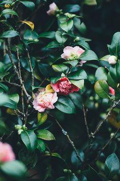 Flores, Florescente, Primavera, Bloom
