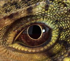 water dragon's eye......into your soul I see....