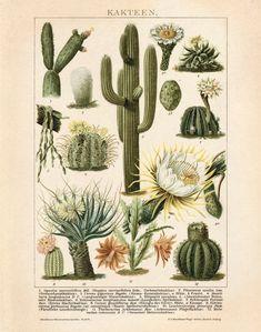 Vintage Kakteen Botanical Desert Educational Diagram Cactus Desert Poster Pull Down Chart flowers Art Vintage, Vintage Botanical Prints, Botanical Drawings, Botanical Art, Vintage Prints, Botanical Posters, Vintage Drawing, Vintage New York, Etsy Vintage
