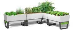 Self watering planters pots urban gardens