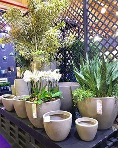 Passeio na 25 de Marco! - Lar Doce Casa Sweet Home, Wonderful Flowers, E Design, Garden Landscaping, Places To Go, Tours, Landscape, Plants, Outlets
