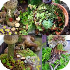 Daily Colours : DIY Fairy Gardening with Succulents has a list plants used