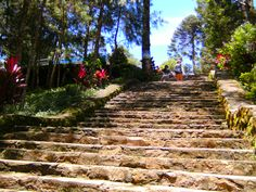 Stairs, Baguio, Wright Park