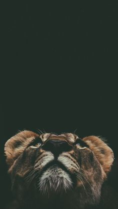 The animal kingdom is filled with almost an infinite variety of creatures. Scientists discover new species and subspecies every year. Lion Wallpaper Iphone, Animal Wallpaper, Animals And Pets, Baby Animals, Cute Animals, Wild Animals, Beautiful Creatures, Animals Beautiful, Tier Wallpaper