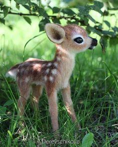 Super Cute Puppies, Baby Animals Super Cute, Cute Wild Animals, Cute Baby Dogs, Baby Animals Pictures, Cute Dogs And Puppies, Cute Little Animals, Cute Animal Pictures, Cute Funny Animals