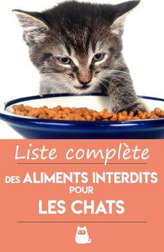 """Gris Housse de coussin chat Oui je fais vraiment besoin de tous ces chats 16/"""" X 16/"""" MAMAN AMIE"""