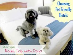 The top hotels 2015: Choosing Pet Friendly Hotels And Other Travel Advice