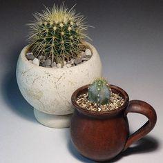Пока мелочь подрастает и формируется,  оформила два кактуса. Очень нравится,  как смотрится кактус в глиняной чашке. Надеюсь, сможет укорениться, т.к. достался мне заморышем с подгнившем низом. Зачем-то забрала его с полки уцененных растений в магазине, хотя не за кактусом пришла. Бедолага был сильно залит.  Отрезала верхушку, подсушила и теперь жду появления корней.  Смотрится уже прикольно😍 #кактусы #суккуленты #хобби #растения #цветы #succulents #kaktus #pots #hobby #plants #flowers