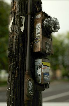 This living, breathing utility pole. | 16 Images Guaranteed To Make Your Eyes Go…