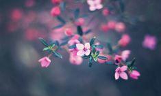 OgNature.com - Small Bloom Petals Flowers Nature Flower Pink Twig Leaves Leaf Macro Wallpaper Backgrounds