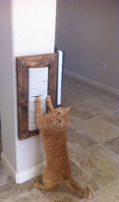 Cats need to scratch to groom their claws. Some do it just for fun or to ruin your furniture. This wall-mount scratching post or panel was made to