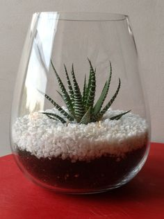 Terrarium-small glass love the simple beauty!
