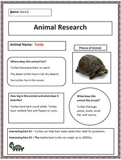 Common Core Animal Research Graphic Organizer - Finished Example