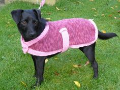 here is a selection of free knitting patterns for pet accessories. These pet accessories are perfect for the family pet or can be made for local animal rescue charities. Knitted Dog Sweater Pattern, Dog Coat Pattern, Knit Dog Sweater, Coat Patterns, Knitted Baby, Large Dog Coats, Large Dog Sweaters, Knitting Patterns For Dogs, Free Knitting