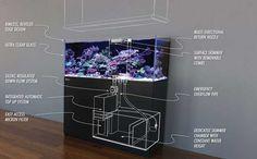 Red Sea Reefer aquarium and sump details.