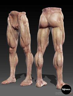 Мужская анатомия – 150 фотографій