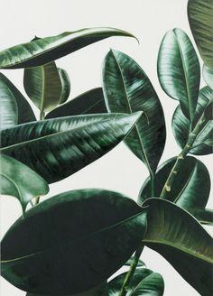 foliage on white: via sometimes-now: Oliver Osborne