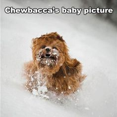It's May Get your laugh on with these 20 hilarious star wars funny pictures. Wondering how to celebrate Star Wars Day? Cuddle & watch star wars with your favorite snacks & star wars gear 🙂 Star Wars Meme, Star Wars Film, Star Trek, Funny Star Wars Pictures, Funny Animal Pictures, Baby Pictures, Funny Animals, Stupid Animals, Funniest Animals