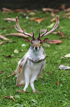 Hybrid Animals Photoshop 18 Hybrid Animals Make My Brain Feel