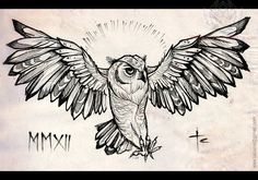 Open wings Owl Drawing