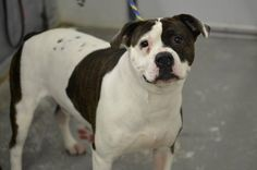 "HANDSOME GUY ""ELTON"" (lovebug) KENNEL # 10 needs a loving home!!!! LORAIN COUNTY OHIO.... https://www.petfinder.com/petdetail/30809261/"