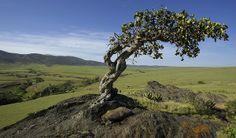 Serengeti Southwest area