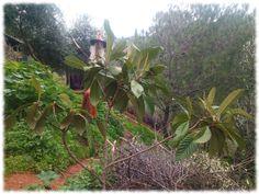 Plantacion de frutales Fukuoka, Compost, Plantar, How To Build, Permaculture, Flooring, Woods, Naturaleza, Composters