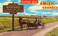 Greetimgs from Intercourse Pennsylvania - Young Amish couple out for a Sunday ride in their Courting Buggy on the road to Intercourse. ~