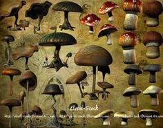 mushrooms - Google Search