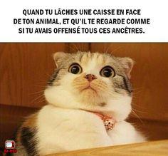Quand tu pètes en face de ton animal... #Chat #Animaux