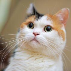 こはる「あたしって三毛やけど普通やん」 てん「普通かなぁ?」 こはる「どういうことなん?!」 て…