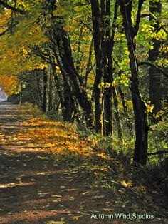 Autumn photography by Jeff Owenby Autumn Photography, Art Photography, Art Studios, Country Roads, Plants, Fall Photography, Fine Art Photography, Fall Pictures, Plant