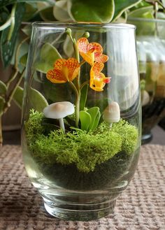 How cute, Miniature Orange Vanda Orchid Terrarium in Recycled Glass Garden Trees, Garden Plants, Miniature Orchids, Vivarium, Gardening Tips, Indoor Gardening, Recycled Glass, Recycling, Planters